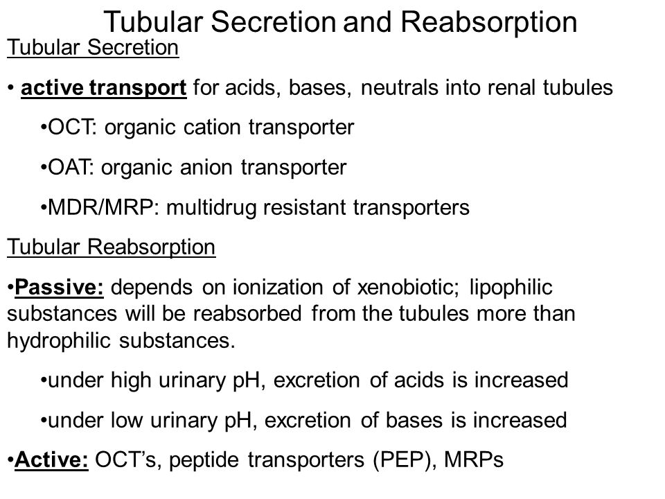Tubular Secretion and Reabsorption Tubular Secretion active transport for acids, bases, neutrals into renal tubules OCT: organic cation transporter OAT: organic anion transporter MDR/MRP: multidrug resistant transporters Tubular Reabsorption Passive: depends on ionization of xenobiotic; lipophilic substances will be reabsorbed from the tubules more than hydrophilic substances.