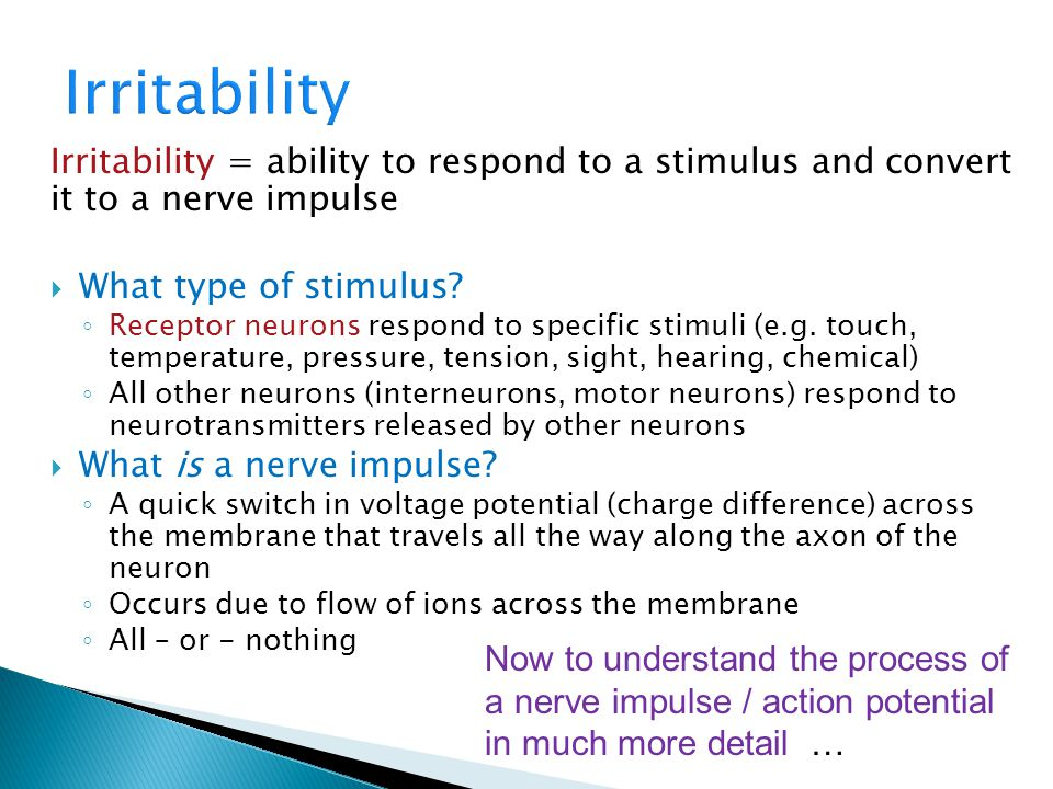 Irritability = ability to respond to a stimulus and convert it to a nerve impulse  What type of stimulus? ◦ Receptor neurons respond to specific stim