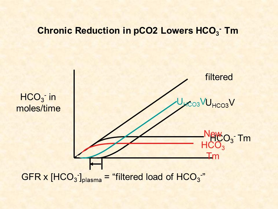 "HCO 3 - in moles/time filtered GFR x [HCO 3 - ] plasma = ""filtered load of HCO 3 - "" HCO 3 - Tm U HCO3 V Chronic Reduction in pCO2 Lowers HCO 3 - Tm N"