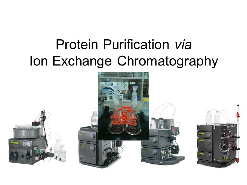 Protein Purification via Ion Exchange Chromatography