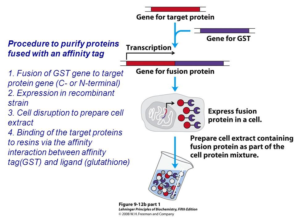 Procedure to purify proteins fused with an affinity tag 1.