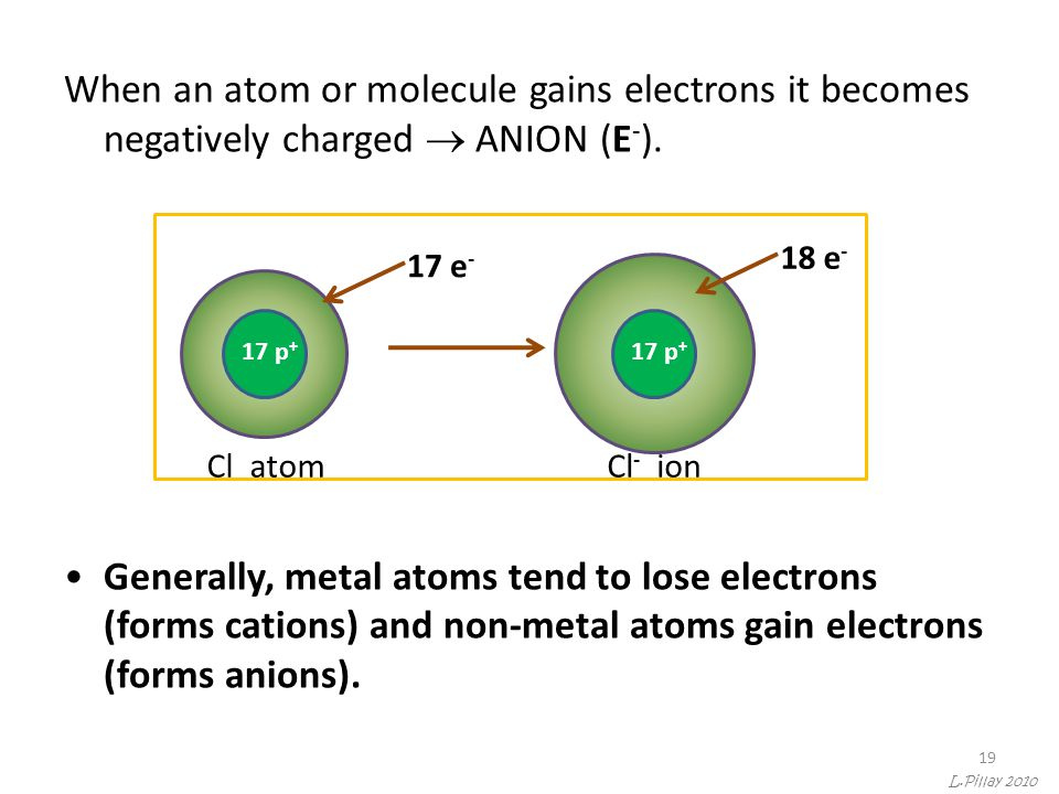 19 When an atom or molecule gains electrons it becomes negatively charged  ANION (E - ). Generally, metal atoms tend to lose electrons (forms cations
