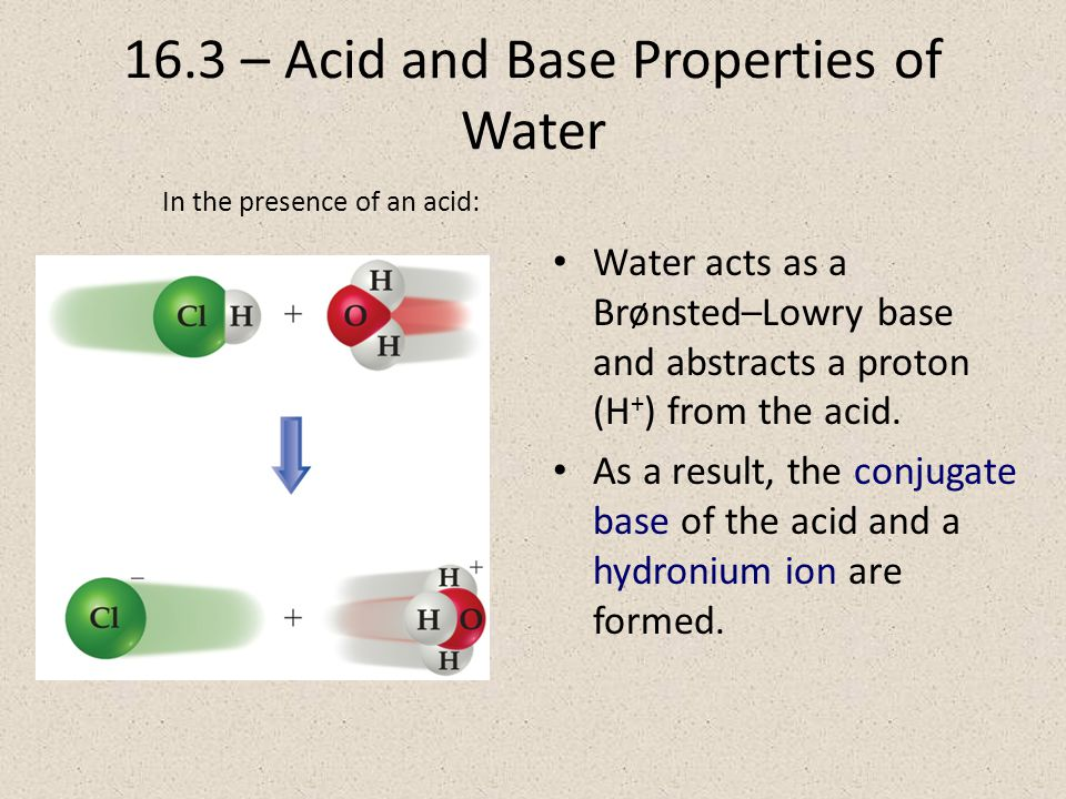16.3 – Acid and Base Properties of Water Water acts as a Brønsted–Lowry base and abstracts a proton (H + ) from the acid.