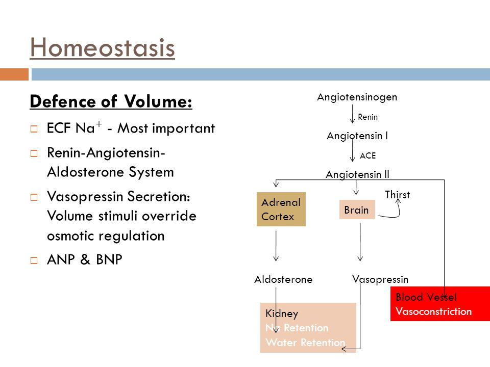 Homeostasis Defence of Volume:  ECF Na + - Most important  Renin-Angiotensin- Aldosterone System  Vasopressin Secretion: Volume stimuli override os