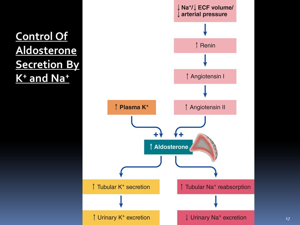 17 Control Of Aldosterone Secretion By K + and Na +
