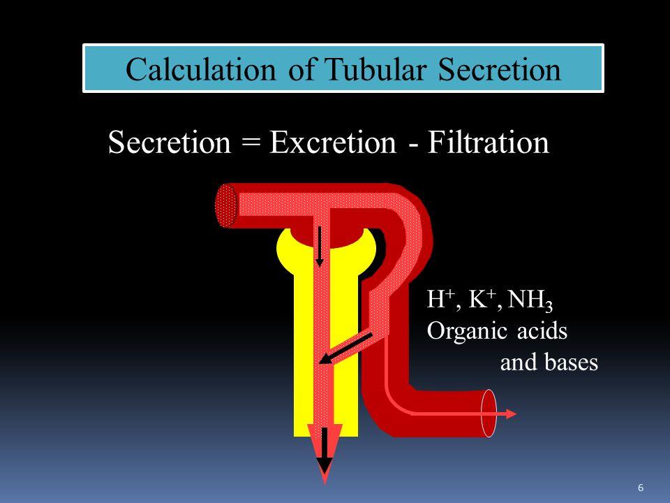 Calculation of Tubular Secretion Secretion = Excretion - Filtration H +, K +, NH 3 Organic acids and bases 6
