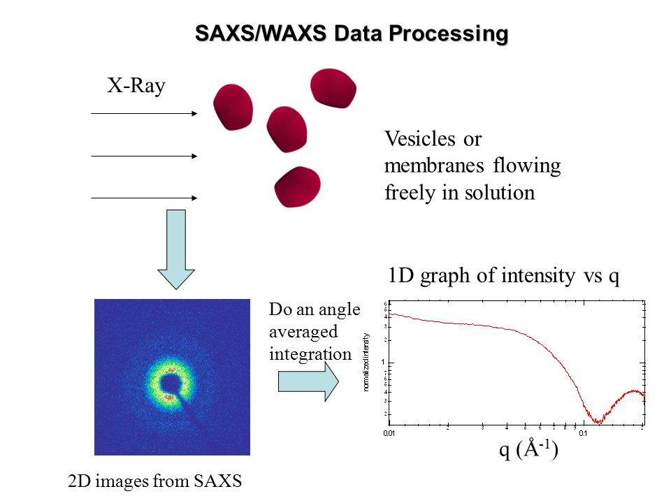 Do an angle averaged integration 2D images from SAXS 1D graph of intensity vs q q (Å -1 ) X-Ray Vesicles or membranes flowing freely in solution SAXS/