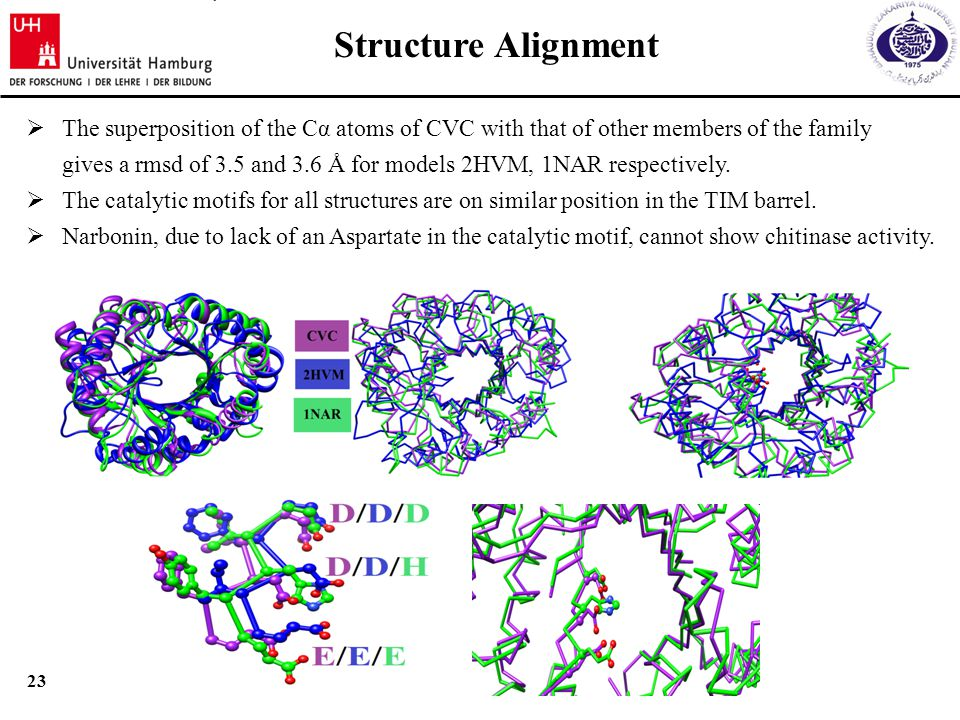 22 Sequence alignment between CVC, Heavime & Narbonin  16% sequence identity between CVC and Hevamine (2HVM).