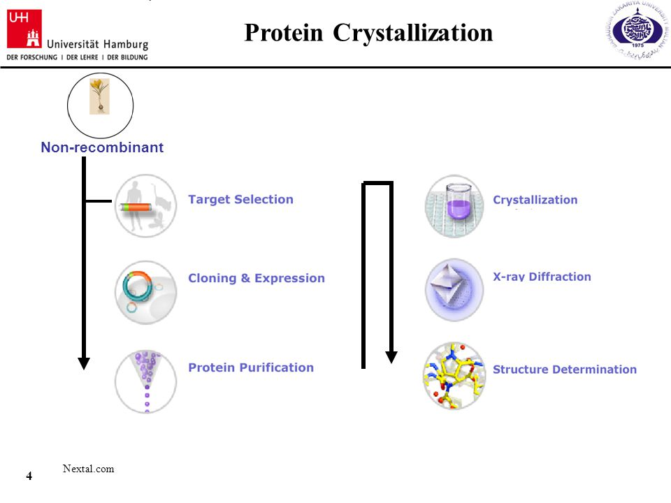 3 1.Isolation and purification of the chitinase protein from C.