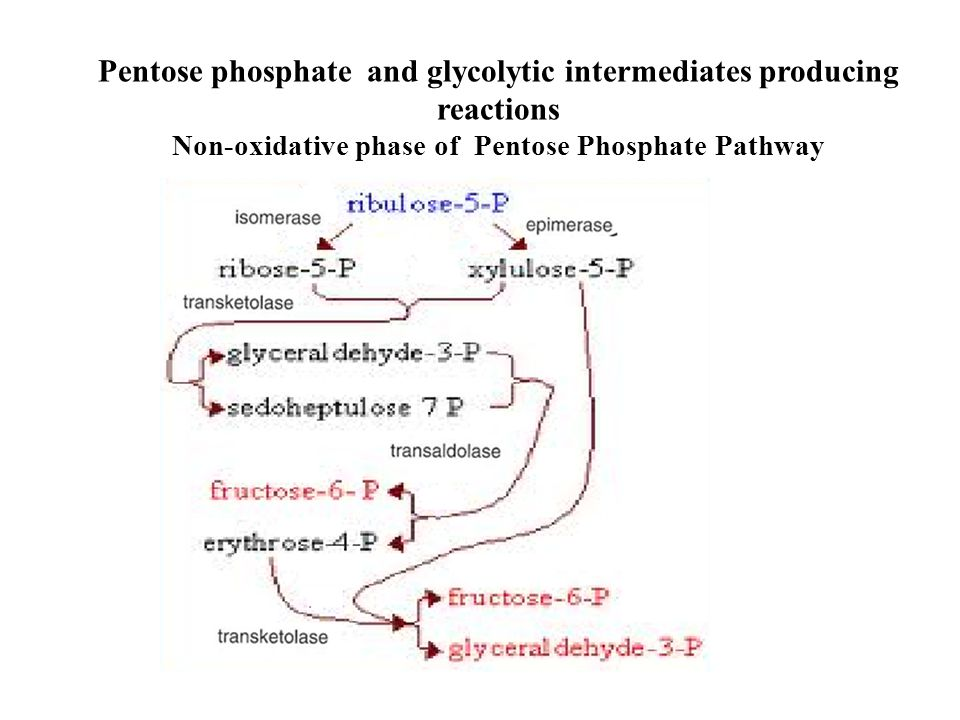 Pentose phosphate and glycolytic intermediates producing reactions Non-oxidative phase of Pentose Phosphate Pathway