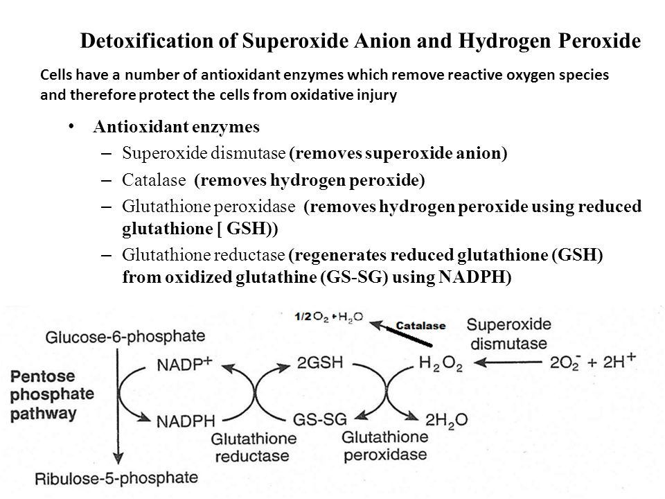 Detoxification of Superoxide Anion and Hydrogen Peroxide Antioxidant enzymes – Superoxide dismutase (removes superoxide anion) – Catalase (removes hydrogen peroxide) – Glutathione peroxidase (removes hydrogen peroxide using reduced glutathione [ GSH)) – Glutathione reductase (regenerates reduced glutathione (GSH) from oxidized glutathine (GS-SG) using NADPH) Cells have a number of antioxidant enzymes which remove reactive oxygen species and therefore protect the cells from oxidative injury