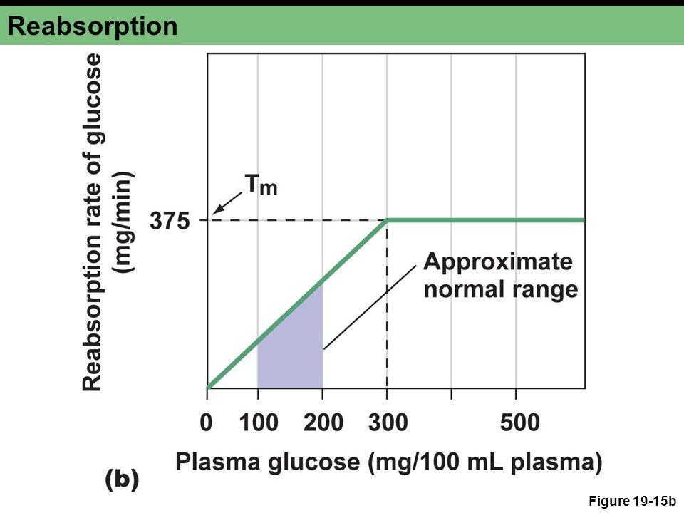Reabsorption Figure 19-15b