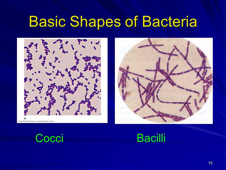 15 Basic Shapes of Bacteria Cocci Bacilli