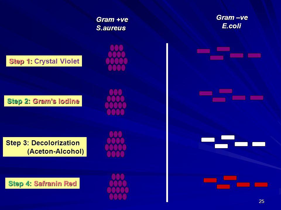 25 Gram +ve S.aureus Gram –ve E.coli E.coli Step 1: Step 1: Crystal Violet Step 2: Gram's Iodine Step 3: Decolorization (Aceton-Alcohol) (Aceton-Alcohol) Step 4: Safranin Red