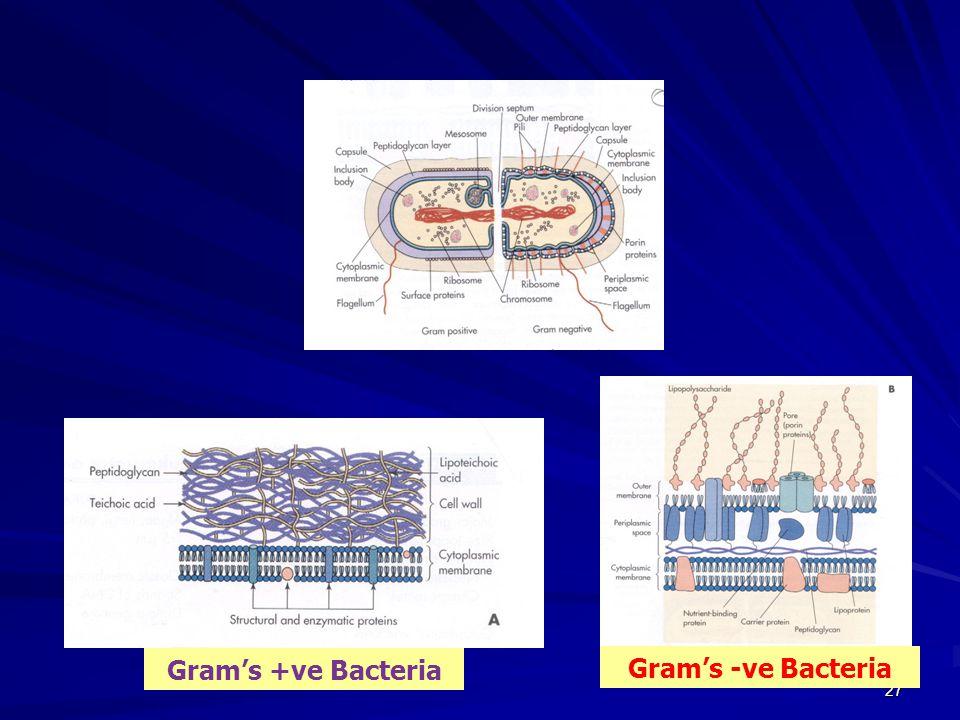 27 Gram's +ve Bacteria Gram's -ve Bacteria
