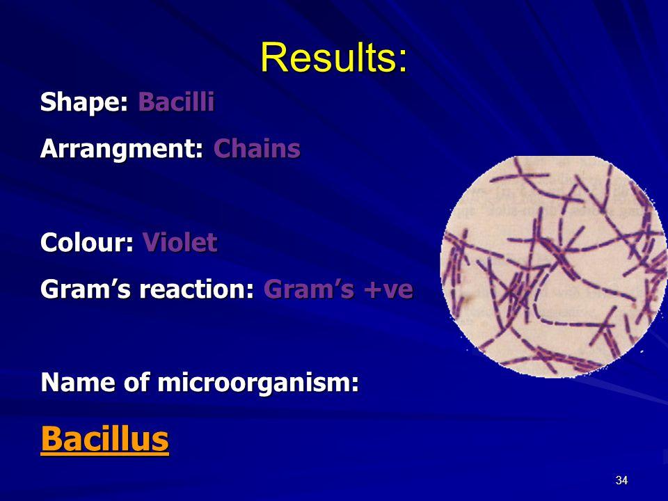34 Results: Shape: Bacilli Arrangment: Chains Colour: Violet Gram's reaction: Gram's +ve Name of microorganism: Bacillus