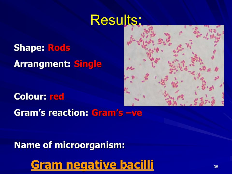 35 Results: Shape: Rods Arrangment: Single Colour: red Gram's reaction: Gram's –ve Name of microorganism: Gram negative bacilli Gram negative bacilli
