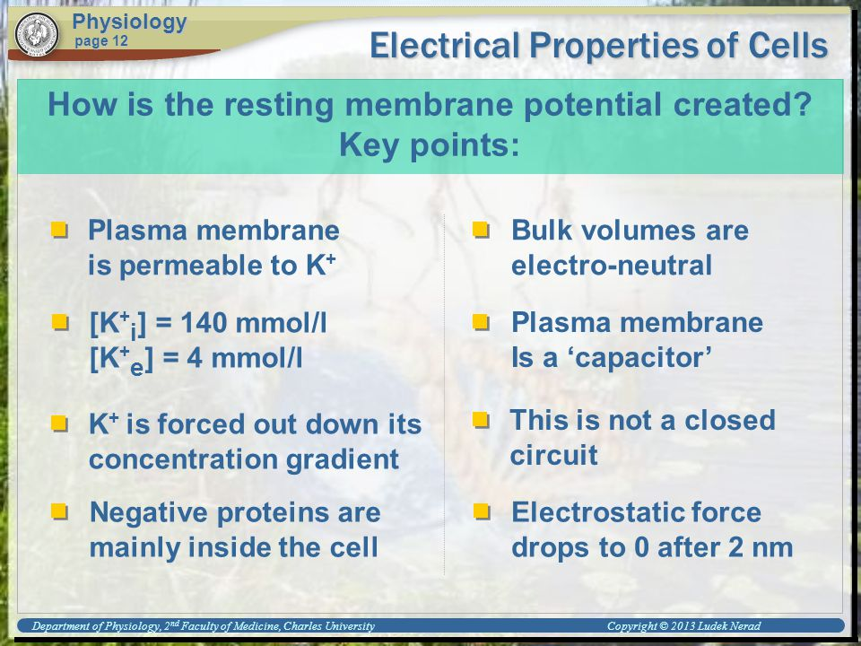 Electrical Properties of Cells Physiology page 12 How is the resting membrane potential created.