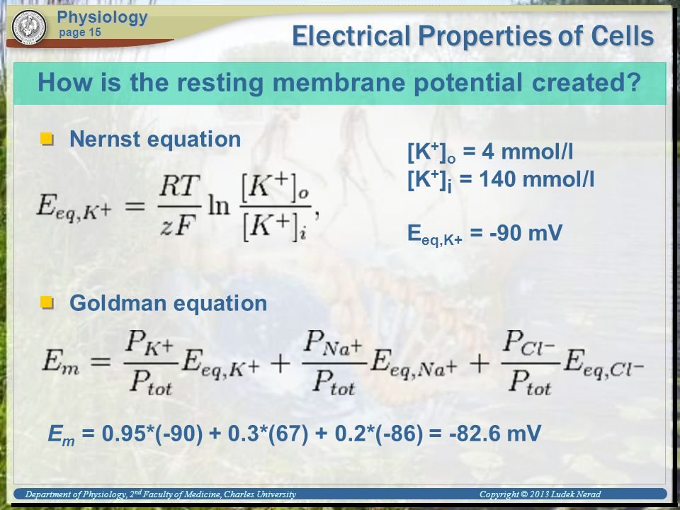 Electrical Properties of Cells Physiology page 15 How is the resting membrane potential created.