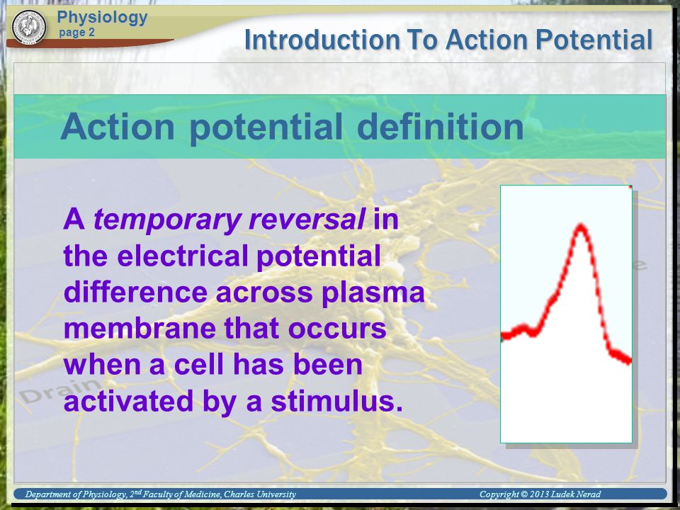 Introduction To Action Potential Physiology page 2 A temporary reversal in the electrical potential difference across plasma membrane that occurs when a cell has been activated by a stimulus.
