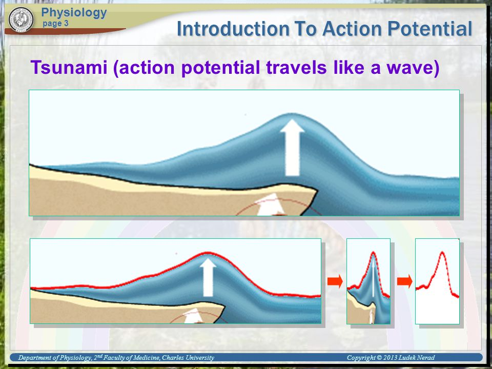 Introduction To Action Potential Physiology page 3 Tsunami (action potential travels like a wave) Department of Physiology, 2 nd Faculty of Medicine, Charles University Copyright © 2013 Ludek Nerad