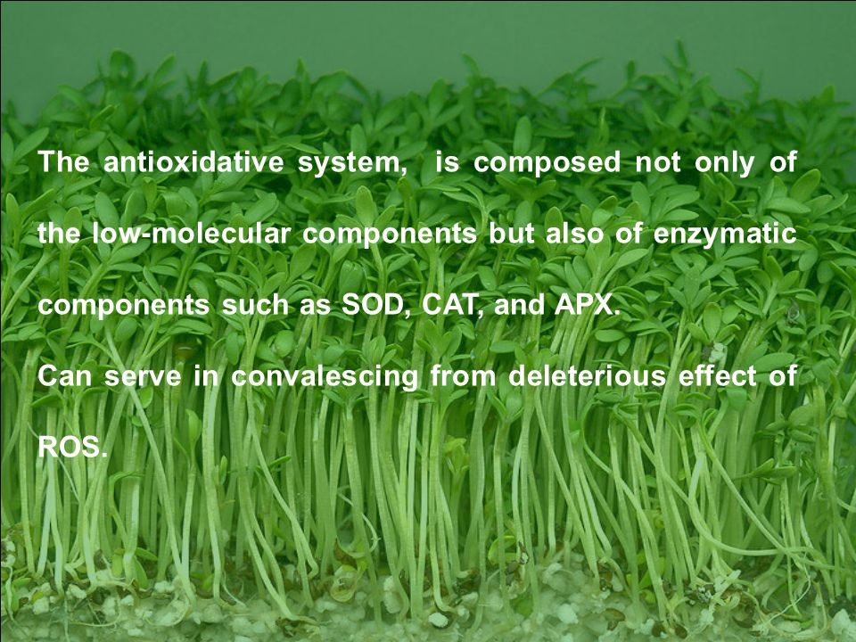 16 The antioxidative system, is composed not only of the low-molecular components but also of enzymatic components such as SOD, CAT, and APX.