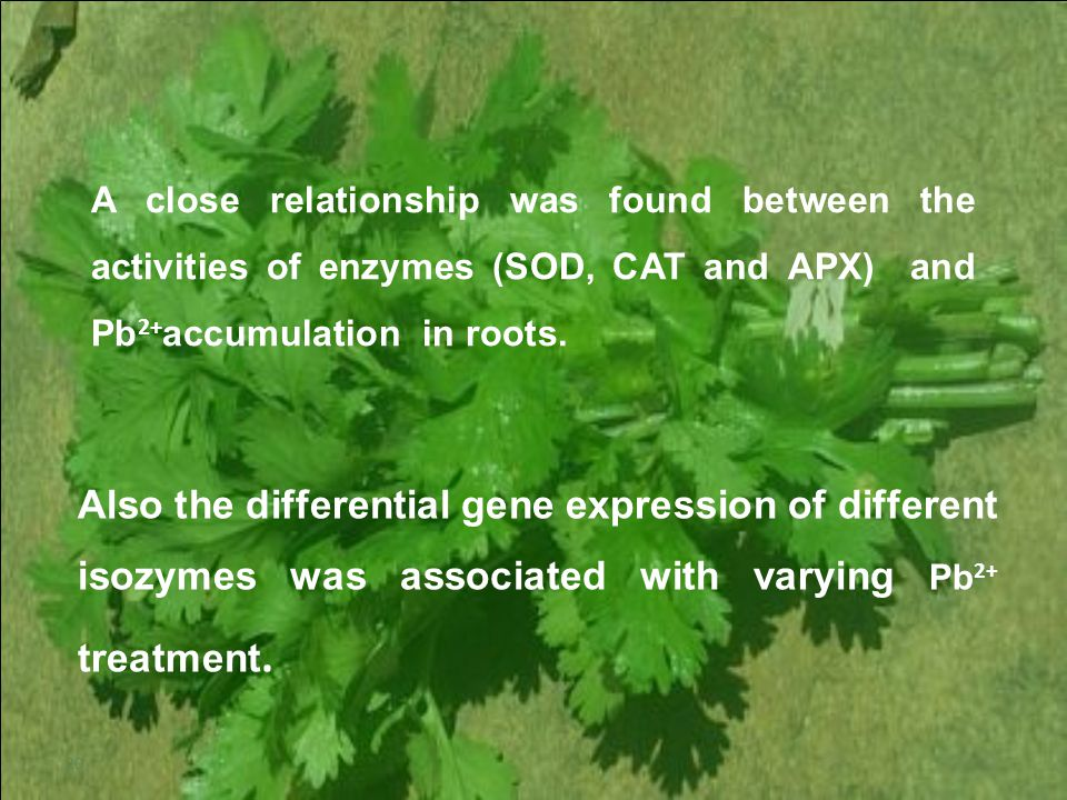 20 A close relationship was found between the activities of enzymes (SOD, CAT and APX) and Pb 2+ accumulation in roots.