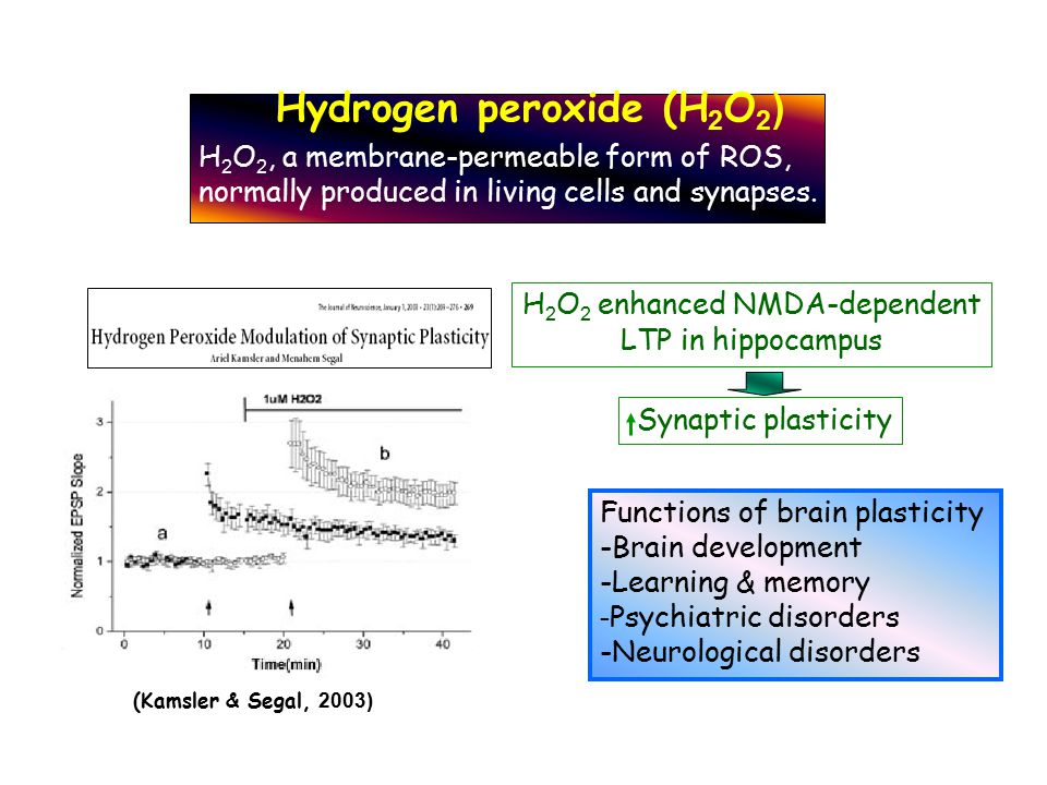 H 2 O 2 enhanced NMDA-dependent LTP in hippocampus Synaptic plasticity (Kamsler & Segal, 2003) Functions of brain plasticity -Brain development -Learn
