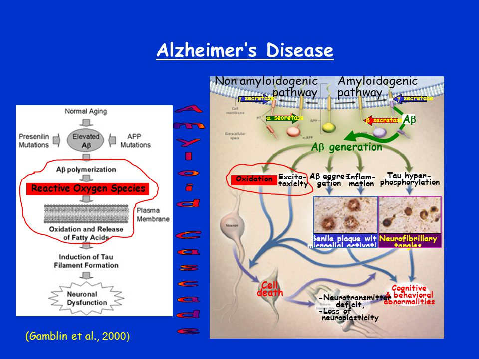 Alzheimer's Disease A  generation Oxidation Excito- toxicity A  aggre- gation Inflam- mation Tau hyper- phosphorylation Cognitive & behavioral abnor