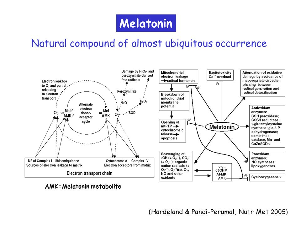 Melatonin (Hardeland & Pandi-Perumal, Nutr Met 2005) Natural compound of almost ubiquitous occurrence AMK=Melatonin metabolite