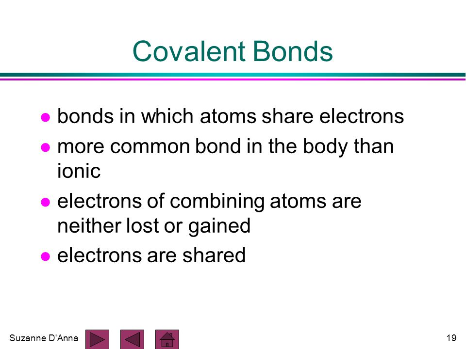 Suzanne D Anna19 Covalent Bonds l bonds in which atoms share electrons l more common bond in the body than ionic l electrons of combining atoms are neither lost or gained l electrons are shared