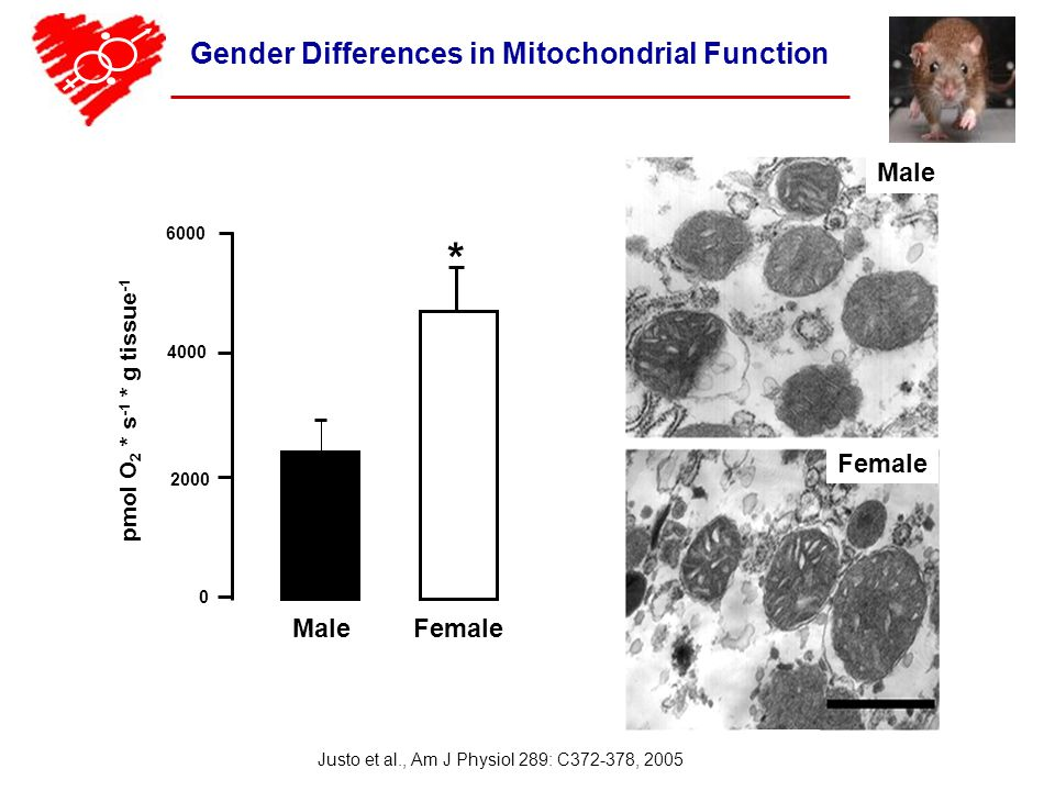 Gender Differences in Mitochondrial Function Male Female 6000 4000 2000 0 pmol O 2 * s -1 * g tissue -1 * Justo et al., Am J Physiol 289: C372-378, 2005 Male Female