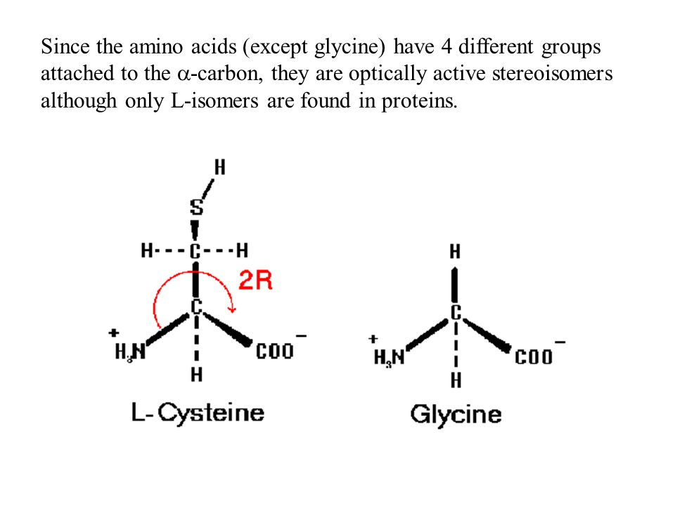 Since the amino acids (except glycine) have 4 different groups attached to the  -carbon, they are optically active stereoisomers although only L-isom