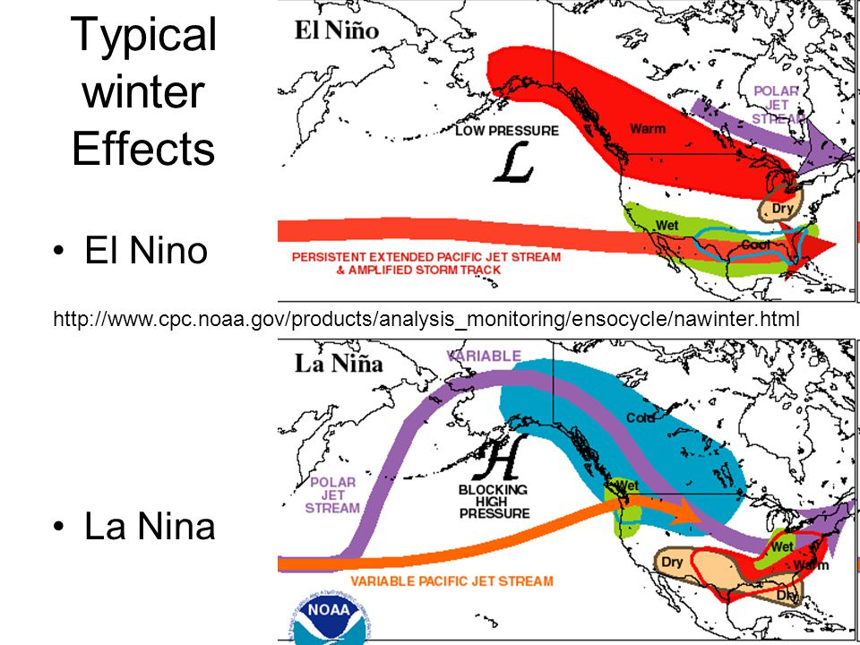 Typical winter Effects El Nino La Nina http://www.cpc.noaa.gov/products/analysis_monitoring/ensocycle/nawinter.html