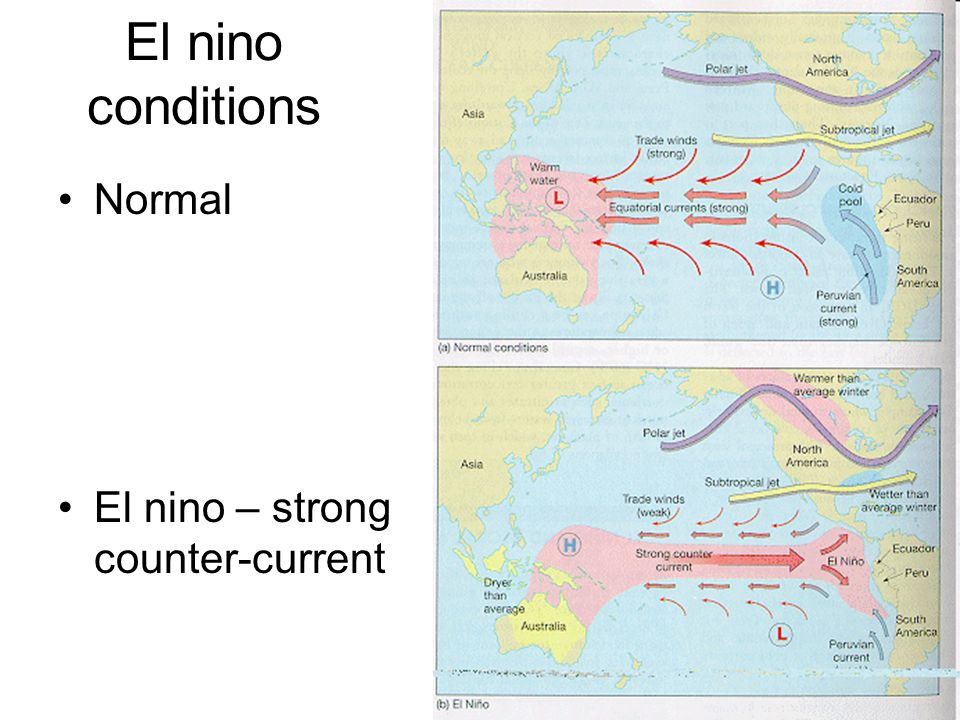 El nino conditions Normal El nino – strong counter-current