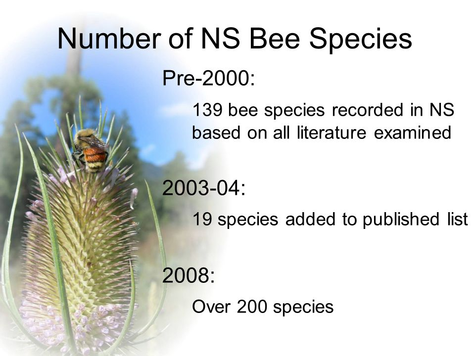 Number of NS Bee Species Pre-2000: 139 bee species recorded in NS based on all literature examined 2003-04: 19 species added to published list 2008: Over 200 species