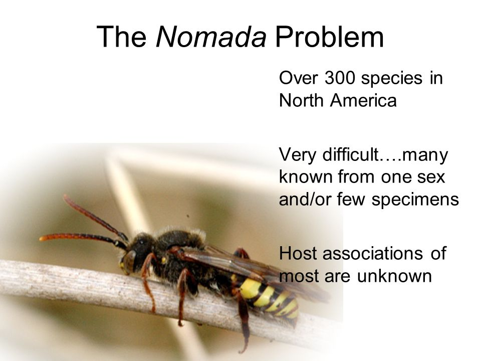 The Nomada Problem Over 300 species in North America Very difficult….many known from one sex and/or few specimens Host associations of most are unknow
