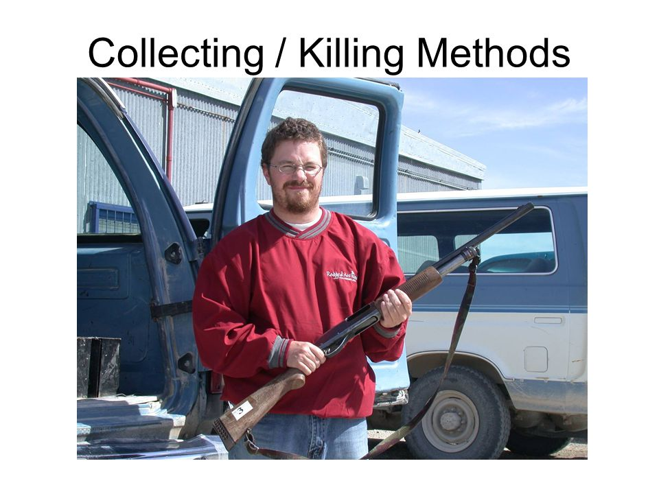 Collecting / Killing Methods