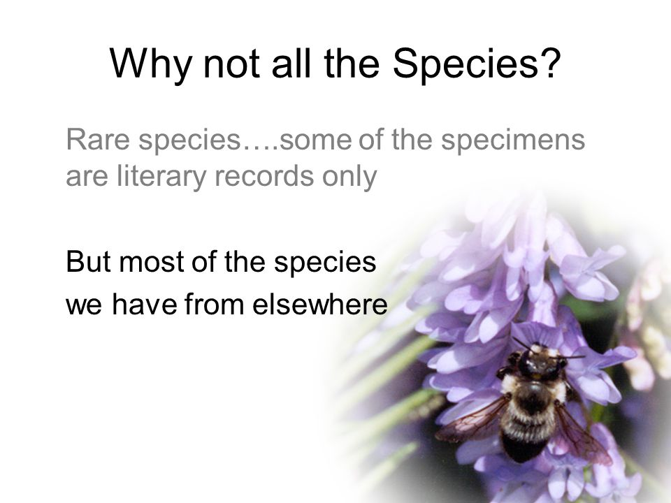 Why not all the Species.
