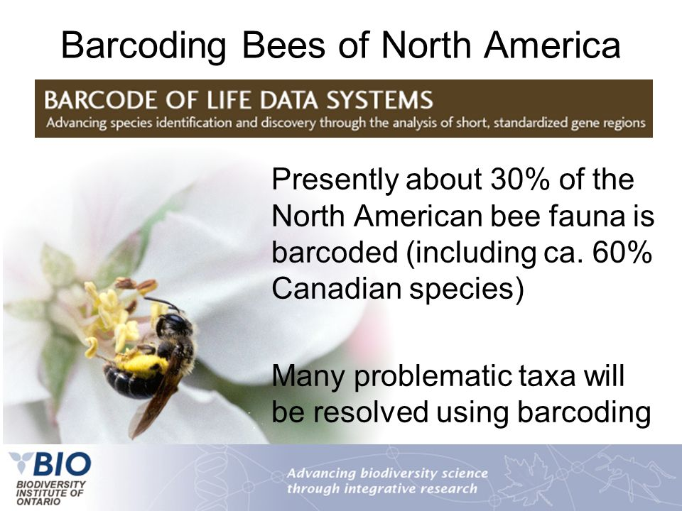 Barcoding Bees of North America Presently about 30% of the North American bee fauna is barcoded (including ca. 60% Canadian species) Many problematic