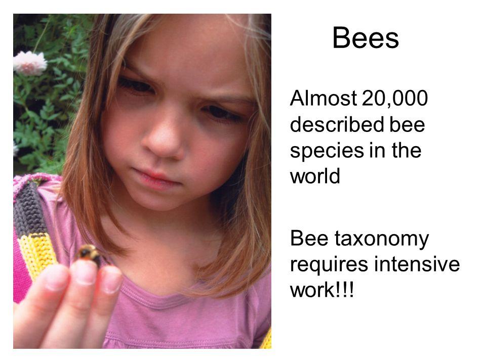Bees Almost 20,000 described bee species in the world Bee taxonomy requires intensive work!!!