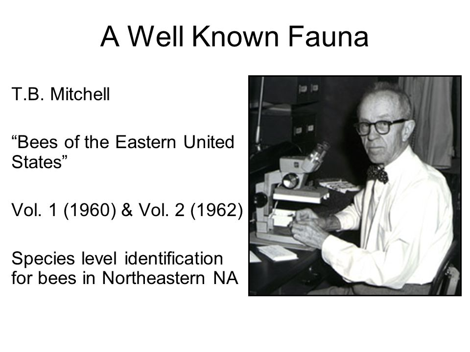 A Well Known Fauna T.B. Mitchell Bees of the Eastern United States Vol.