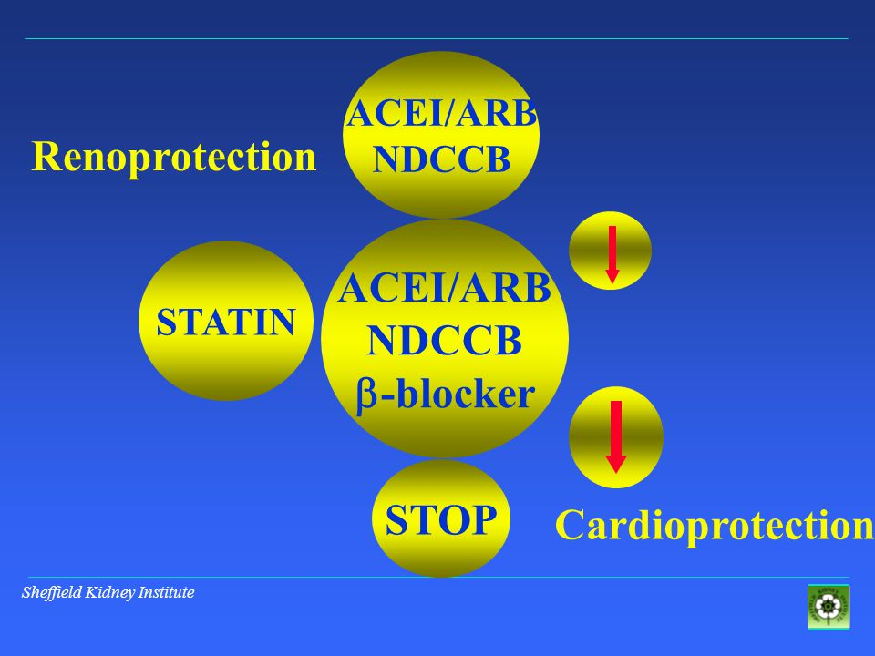 Sheffield Kidney Institute ACEI/ARB NDCCB  -blocker ACEI/ARB NDCCB STATIN STOP Renoprotection Cardioprotection