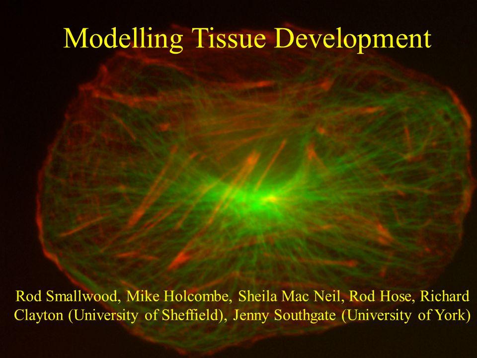 University of Sheffield www.dcs.shef.ac.uk/~rod/ Modelling Tissue Development Rod Smallwood, Mike Holcombe, Sheila Mac Neil, Rod Hose, Richard Clayton (University of Sheffield), Jenny Southgate (University of York)