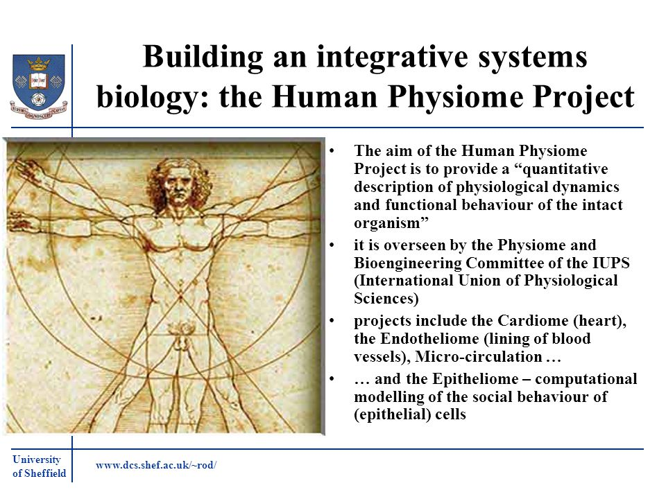 University of Sheffield www.dcs.shef.ac.uk/~rod/ Building an integrative systems biology: the Human Physiome Project The aim of the Human Physiome Pro