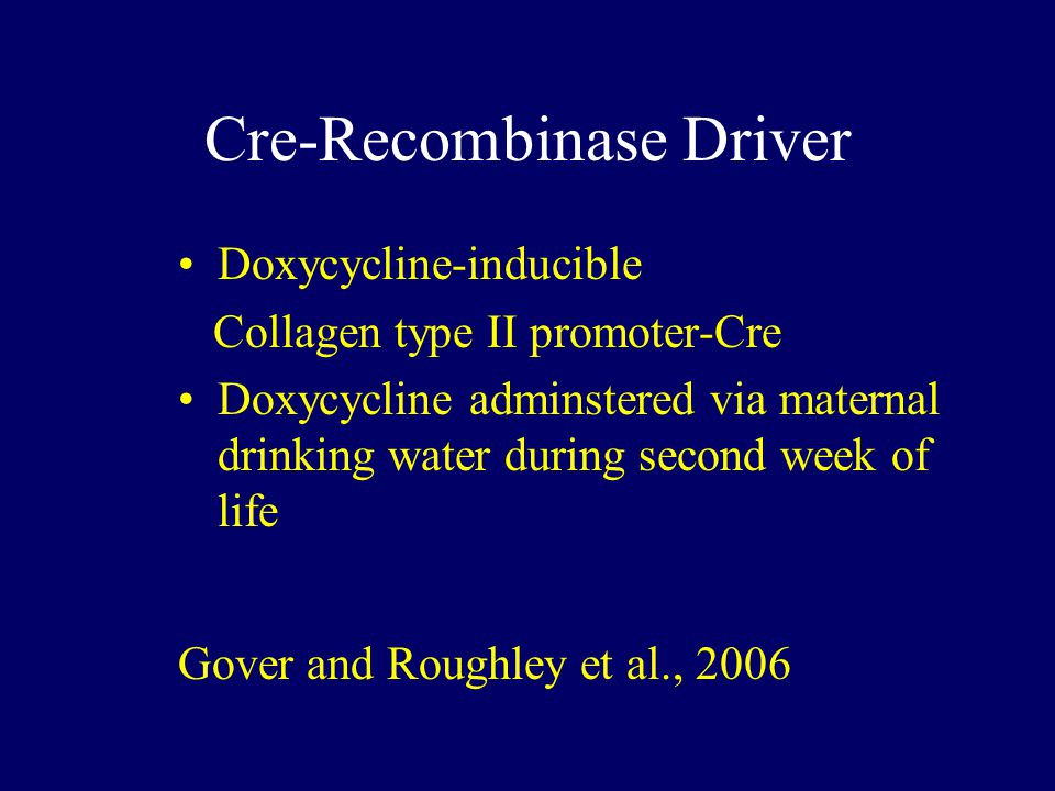 Cre-Recombinase Driver Doxycycline-inducible Collagen type II promoter-Cre Doxycycline adminstered via maternal drinking water during second week of life Gover and Roughley et al., 2006