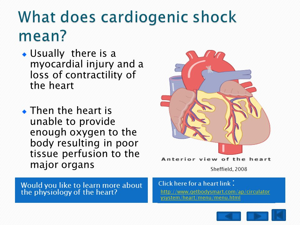 Would you like to learn more about the physiology of the heart.