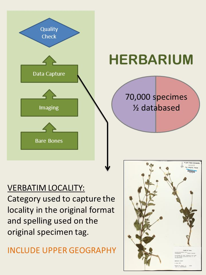 Bare Bones Imaging Data Capture Quality Check HERBARIUM 70,000 specimes ½ databased VERBATIM LOCALITY: Category used to capture the locality in the original format and spelling used on the original specimen tag.