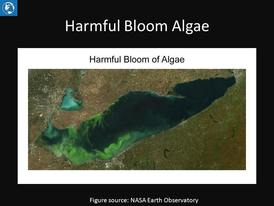 Harmful Bloom Algae Figure source: NASA Earth Observatory