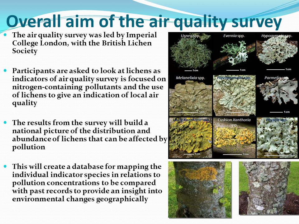Overall aim of the air quality survey The air quality survey was led by Imperial College London, with the British Lichen Society Participants are asked to look at lichens as indicators of air quality survey is focused on nitrogen-containing pollutants and the use of lichens to give an indication of local air quality The results from the survey will build a national picture of the distribution and abundance of lichens that can be affected by pollution This will create a database for mapping the individual indicator species in relations to pollution concentrations to be compared with past records to provide an insight into environmental changes geographically